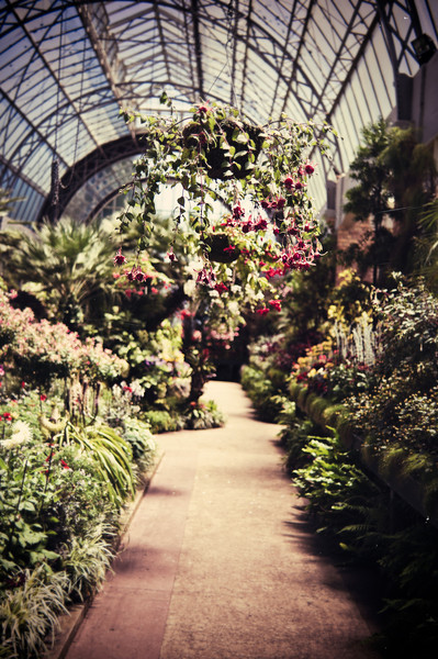 winter gardens auckland domain david st george photography documentary image