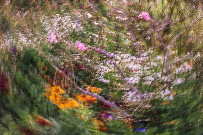 flower photography impressionist david st george monet image long exposure