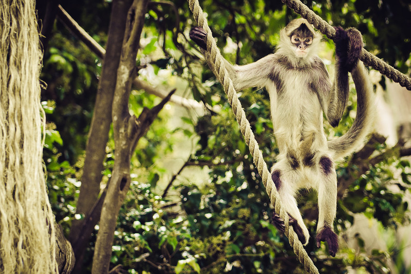 spider monkey auckland zoo david st george documentary photography